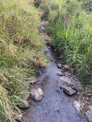 Blaosere bán lô đất 2000m2 vườn trà bằng có suối