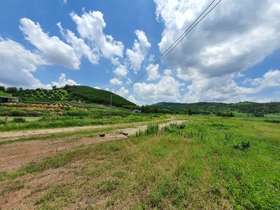 Đất 7 Ha Vườn Điều Tân Nghĩa - Hàm Tân chính chủ