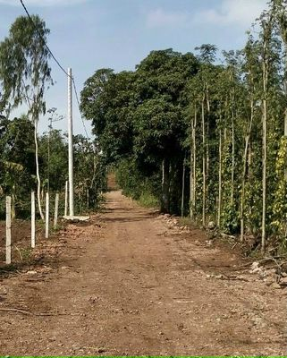 Cần bán 5.427m2 đất vườn, 2 mặt tiền đường 5m.