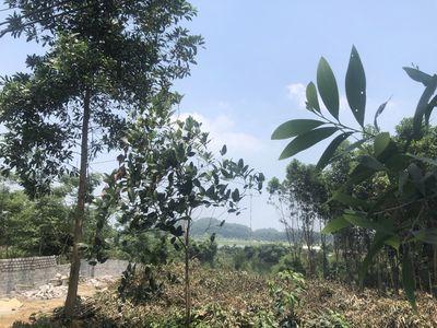 1,1ha đất nghỉ dưỡng sát hồ Đồng Mô