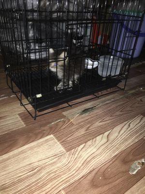 Cần bán chuồng cho mèo ạ