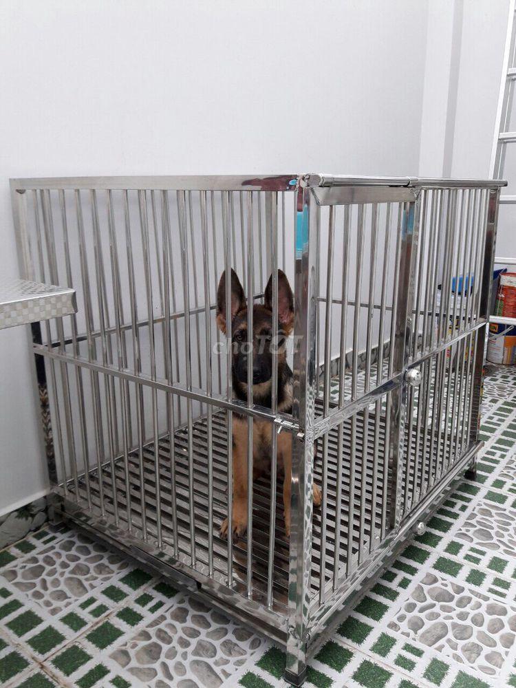 Chuồng chó inox THIEN KIM