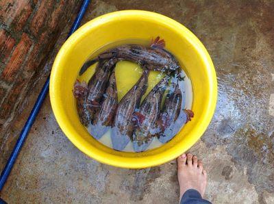 cá đặc sản