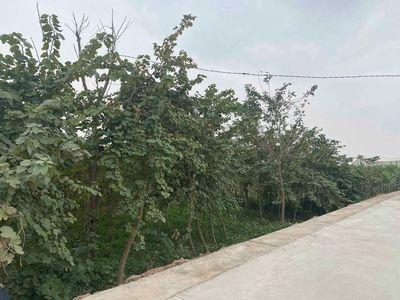 Bán mảnh đất 2100m2, Lô Góc, Thường Tín, Hà Nội