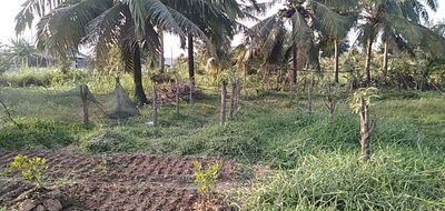 Bán đất vườn nông nghiệp