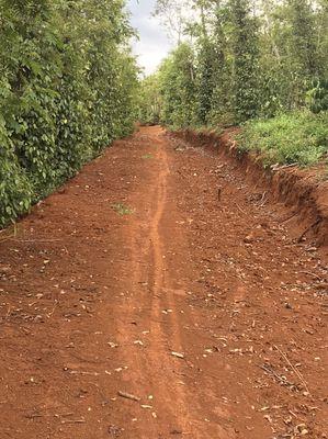Bán 2 ha đất  trồng cây lâu năm xã Nậm N'Jang🔥