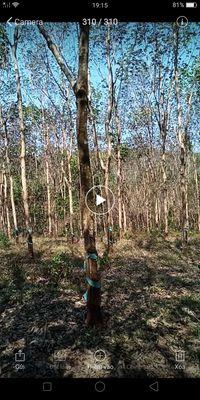 Bán đất cao su tỉnh Đắk Nông