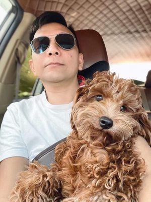 Cần chuộc chó Poodle bị mất