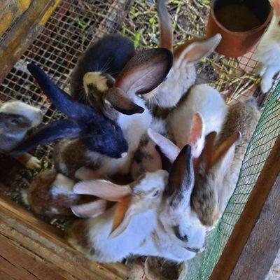 0765040078 - Chuyên thu mua thỏ con