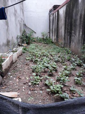 CC bán mảnh đất  ở Phú Diễn Hữu Hoà Thanh Trì -HN
