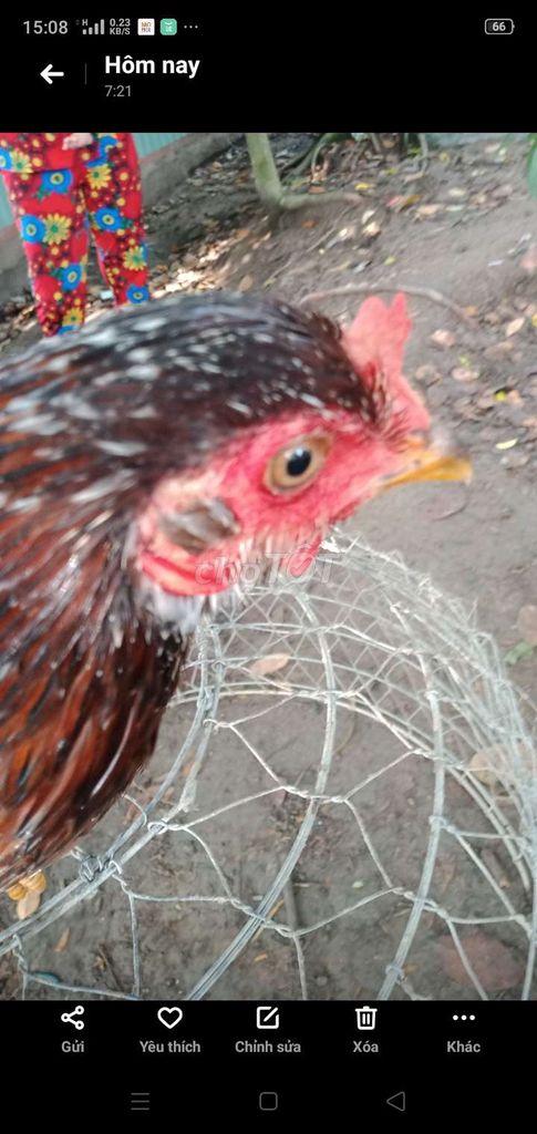 0989115845 - mái nồi ấp 10trứng