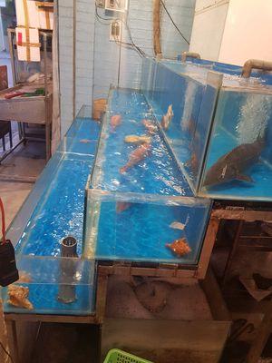 Cần bán hồ hải sản mới toanh, dùng được 2 tháng