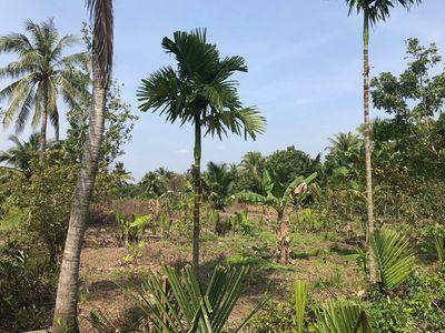 Bán đất Phú Mỹ Gần chợ Vĩnh Hoà