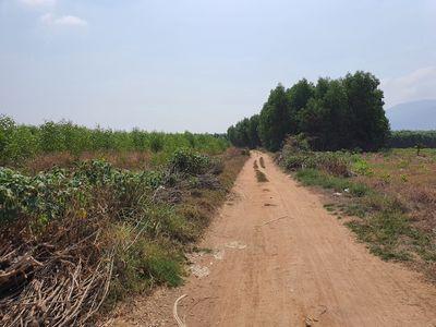 Đất 3.4 Ha Tân Đức, Hàm Tân gần QL1A
