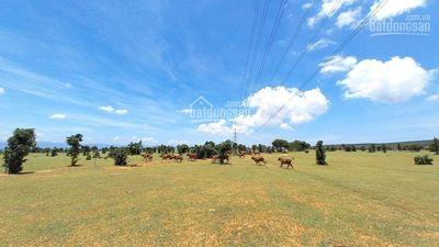 Tài chính 600tr đã mua được đất gần cao tốc, QL1A