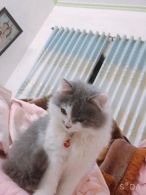 Bé mèo 5 tháng tuổi , nặng 2,5 cân