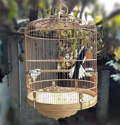 Bán chim than cho ai cần.