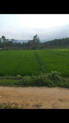 Đất Huyện Hòa Vang 440m2