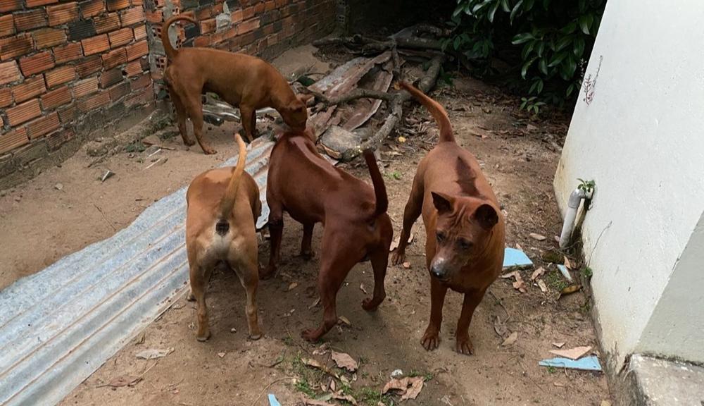 Chó xoáy thái Thanh Tùng