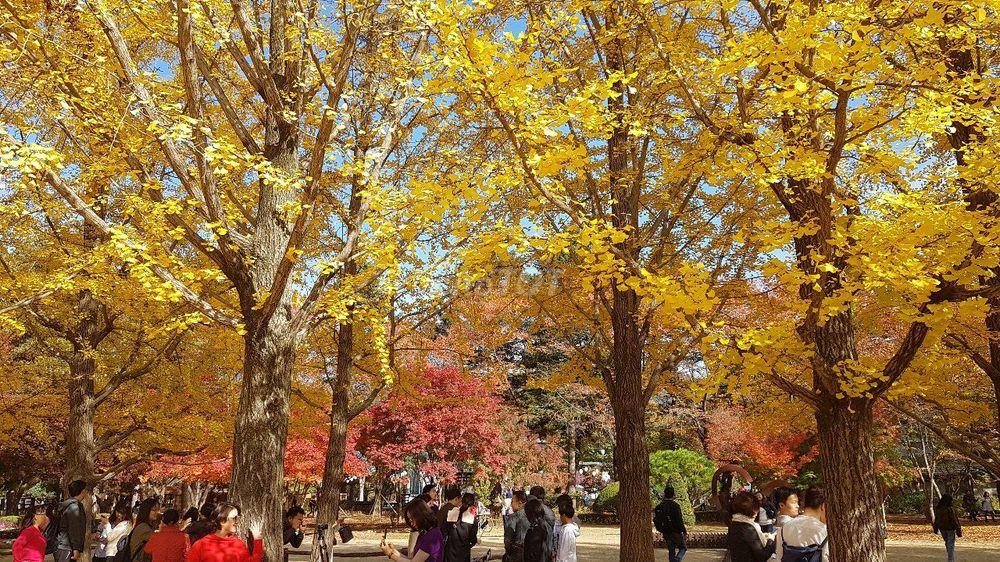 Du lịch Hàn Quốc mùa thu lá vàng, lá đỏ 23-27/10.