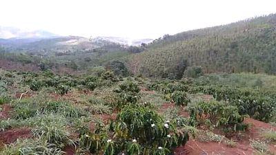 Đất sổ nông nghiệp huyện Đắk Song 14000m2