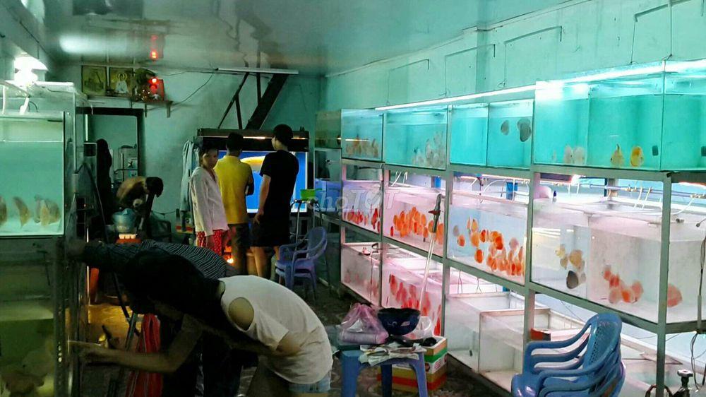 cá dĩa phong thủy