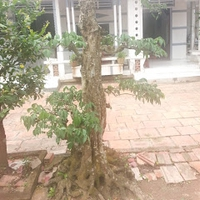 Nguyễn Nhật Tâm