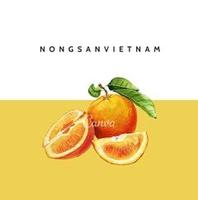 Nông Sản Việt