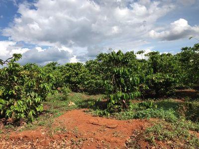Đất Huyện Chư Prông 23741m²