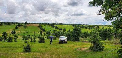 Đất nông nghiệp 70tr/sào có tràm keo,oto tận nơi