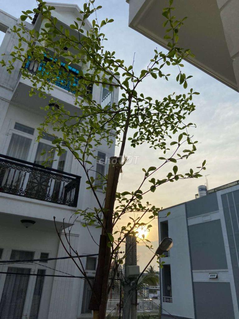 0975066336 - Chính chủ bán gấp nhà KDC Hồng Long, XH vô tới nhà
