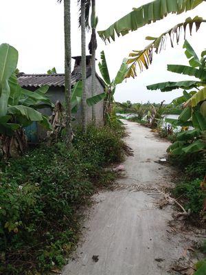 Cần bán mảnh vườn 1000m ở xã bát trang đất 64