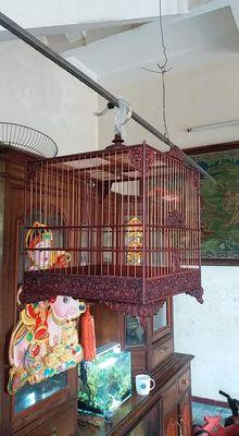 Lồng chim cho người có điều kiện