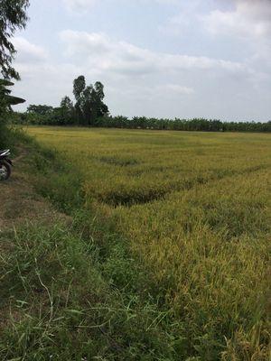 Đất Huyện Lai Vung 5762m²